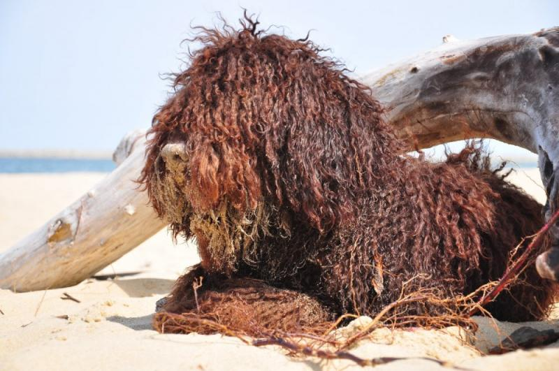 barbet I wanted to be a sailor