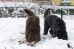 Szczeniaki-Luty_w_sniegu (13 of 124).jpg