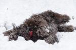 luty_w_sniegu-36-of-124-8.jpg