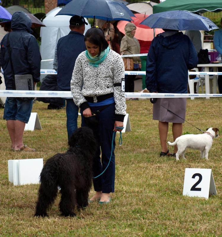 barbet FRULA at the dog show