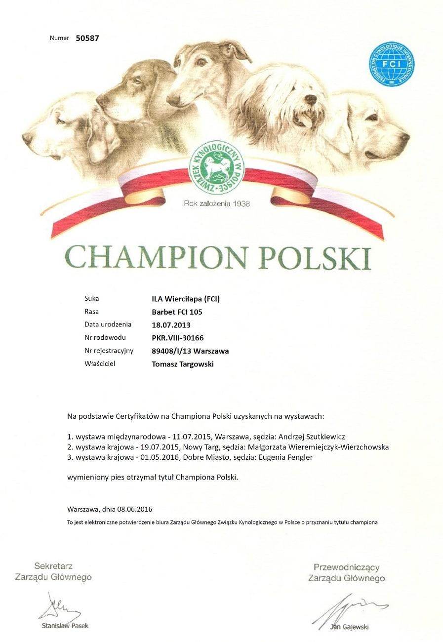 barbet ILA Wierciłapa - Champion Polski