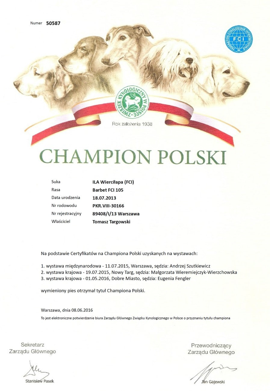 barbet ILA Wierciłapa - Polish Champion