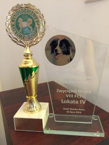 barbet JASPER Wierciłapa wygrywa w Bielsku-Białej i...