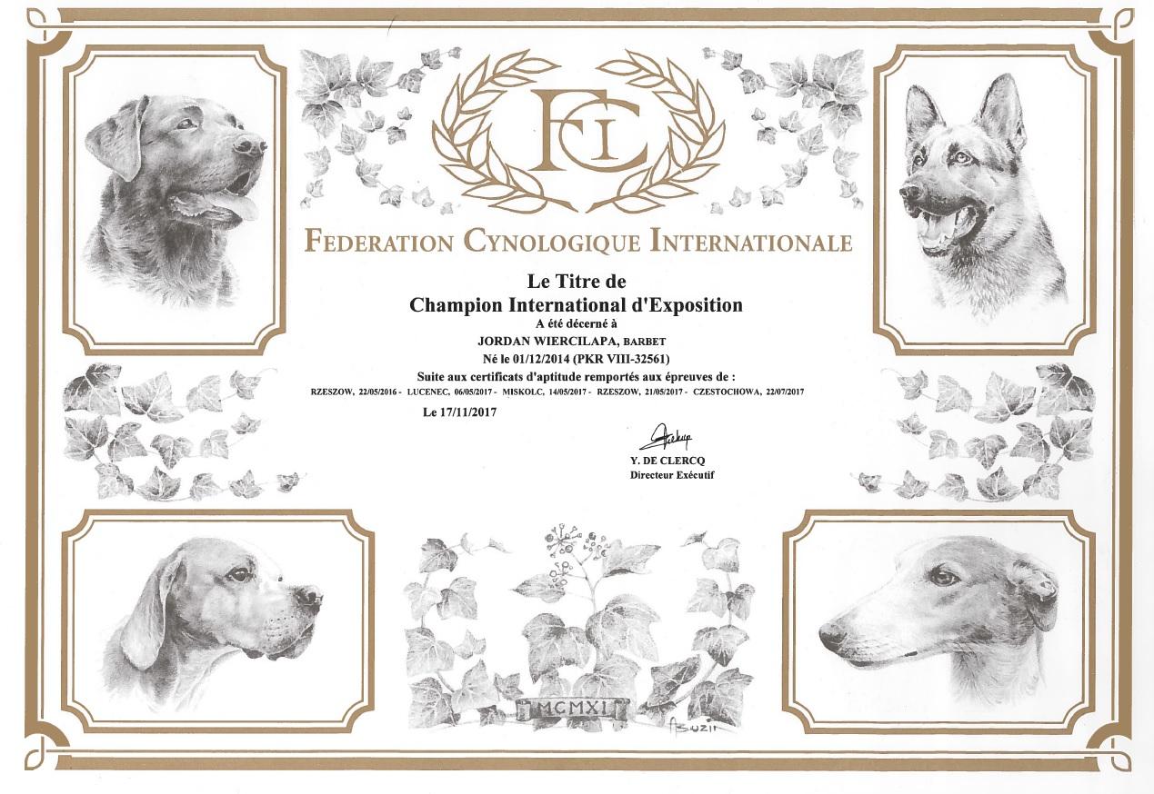 barbet JORDAN Wierciłapa Międzynarodowym Championem