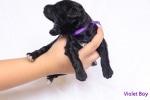violet-boy-2-of-3.jpg