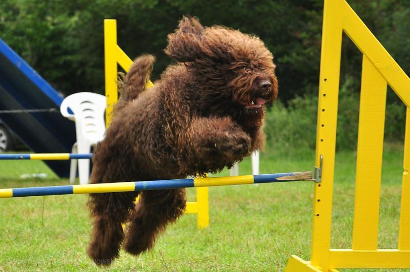barbet Wakacyjny obóz agility 2011