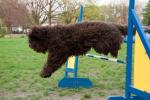 27-04-2011-agility31.jpg