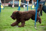 27-04-2011-agility24.jpg