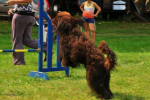 barbet-agility-42-of-139.jpg