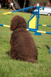 barbet-agility-5-of-139.jpg