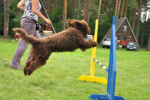 barbet-agility-62-of-139.jpg