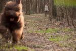 02-04-2011-wykopki-w-lesie-003