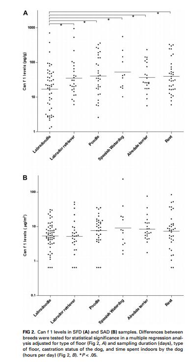 barbet Hipoalergiczny mit