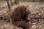 02-04-2011-wykopki-w-lesie-014.jpg