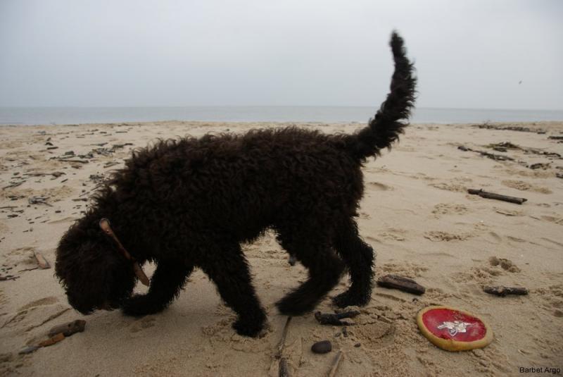 barbet-Wyprawa nad morze 1