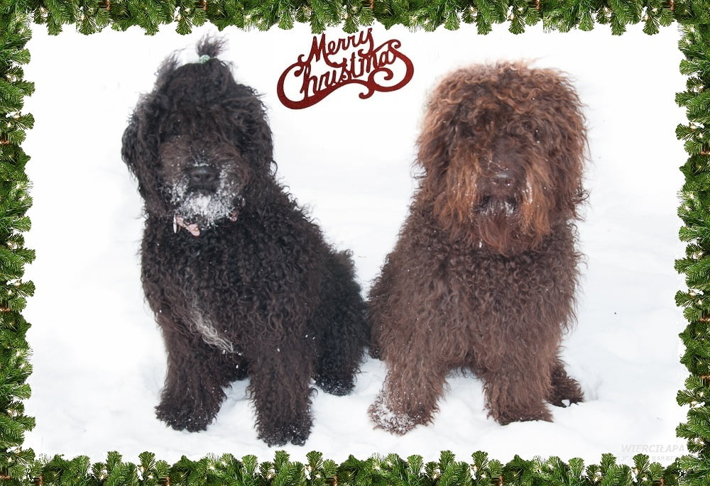 barbet Merry Christmas and Happy New Year!