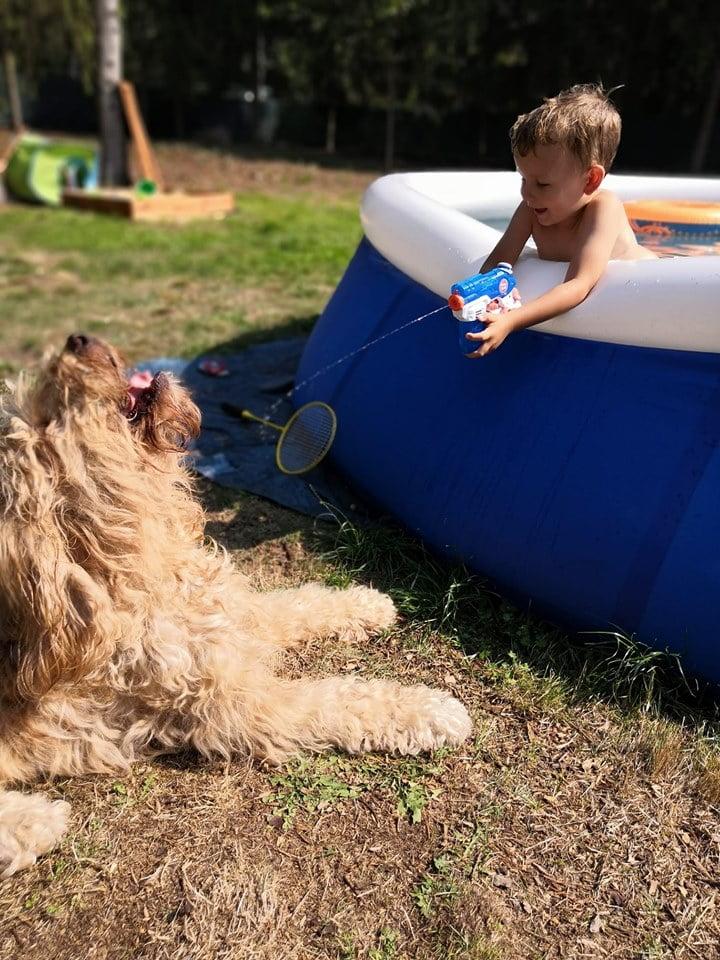 barbet-Pies i dzieci, dzieci i pies. 1