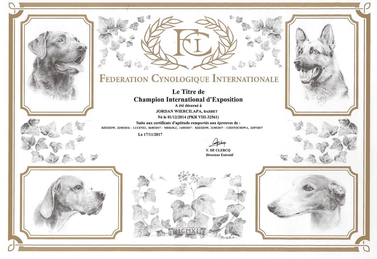 barbet-JORDAN Wierciłapa Międzynarodowym Championem 1
