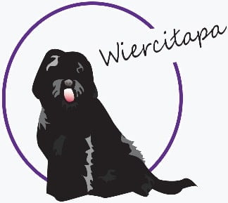 Barbet kennel Wierciłapa